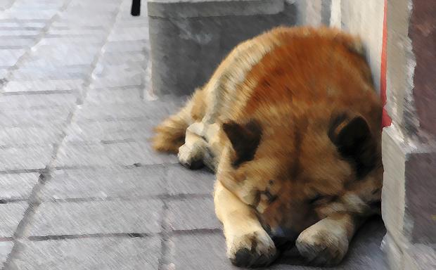 Για μία ακόμα φορά υπόλογος για την κατάσταση  των αδέσποτων ζώων της Αθήνας μας ο κ. Καμίνης