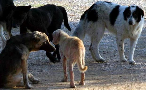 Εκατοντάδες χιλιάδες τα αδέσποτα σκυλιά