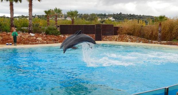 Μήνυση ProWal κατά του Αττικού Πάρκου για τα δελφίνια