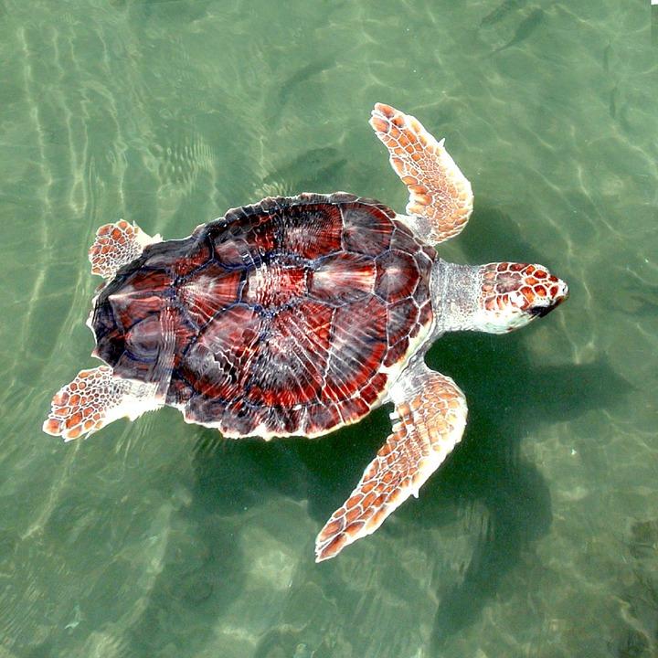 Στα θύματα της κλιματικής αλλαγής συγκαταλέγονται οι θαλάσσιες χελώνες