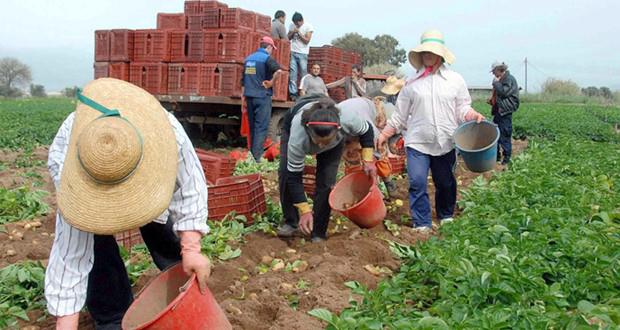 ΥπΑΑΤ: Με εργόσημο οι εργάτες γης- Κίνητρα στους συνταξιούχους για απασχόληση στο χωράφι