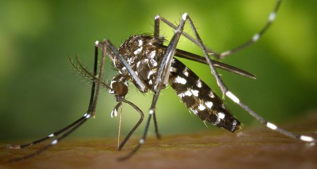 Απειλή για 700.000.000 ανθρώπους τα κουνούπια!