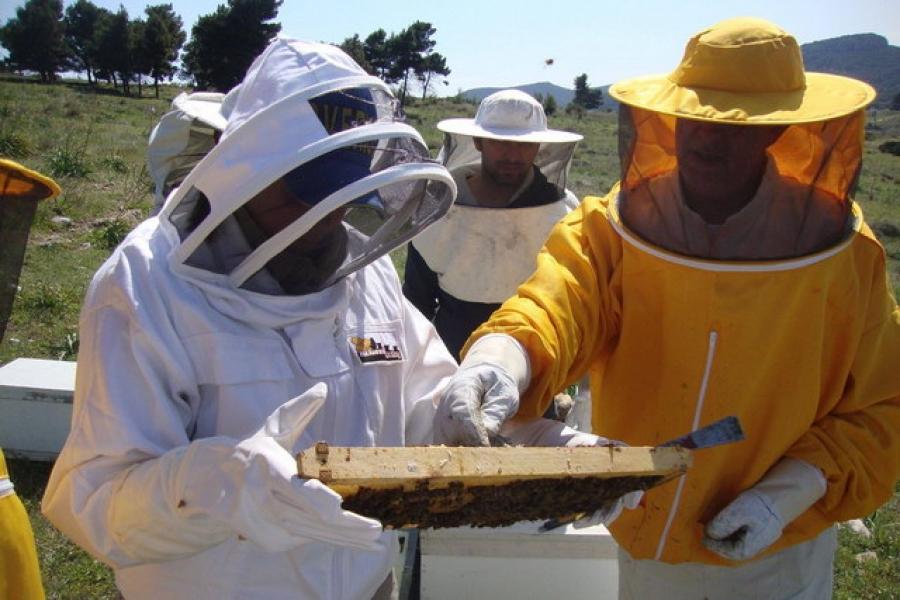 Εκπαίδευση μελισσοκόμων στην Κεφαλονιά- Αίτηση συμμετοχής
