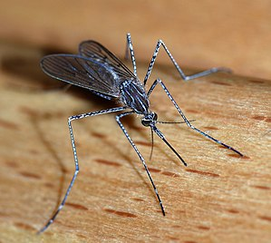 3η Επίγεια εφαρμογή ψεκασμών καταπολέμησης κουνουπιών για το έτος 2018 όλων των Δήμων της Περιφερειακής Ενότητας Ανατολικής Αττικής