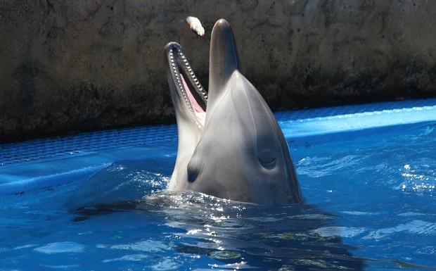 Διαμαρτυρία για την προστασία των δελφινιών με Μέλος του Ευρωπαϊκού Κοινοβουλίου και Φιλοζωικές Οργανώσεις στην Αθήνα