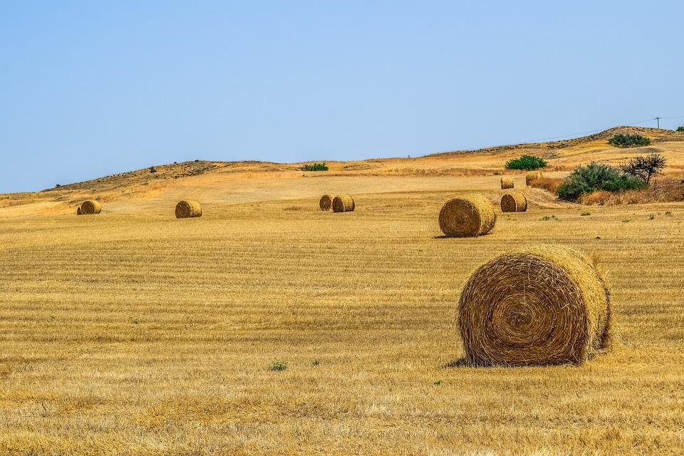 Παραχωρήσεις αγροτικών εκτάσεων σε ακτήμονες αγρότες