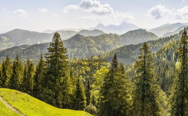 Δάση: Εμπρηστικές προσδοκίες μισού περίπου αιώνα…