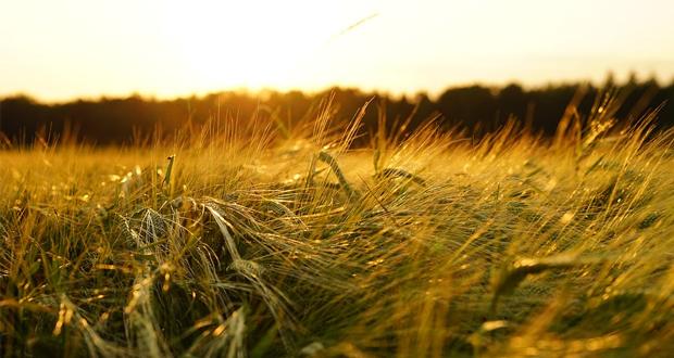 Δωρεάν γεωργική εκπαίδευση σε έξι επαγγελματικές σχολές του ΕΛΓΟ-ΔΗΜΗΤΡΑ