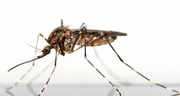 ΙΣΑ: Οι πολίτες να λάβουν μέτρα προφύλαξης από τα κουνούπια…
