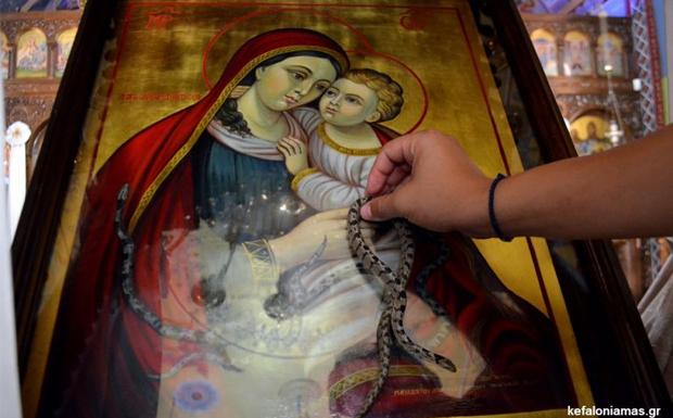 Κεφαλονιά: Τα φιδάκια της Παναγίας