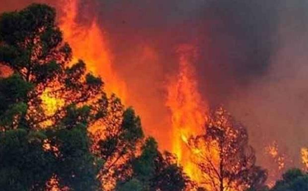 77 χρόνια φυλάκιση  για τη φωτιά στην Ηλεία!