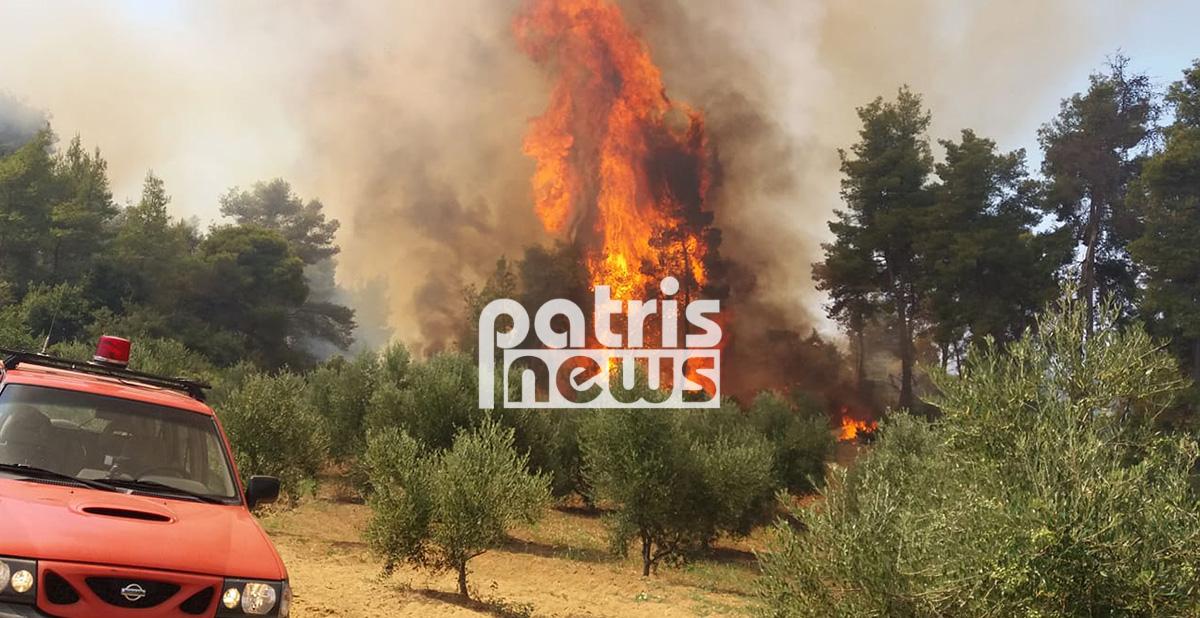 Στις φλόγες η Ηλεία: Δύο πύρινα μέτωπα απειλούν οικισμούς