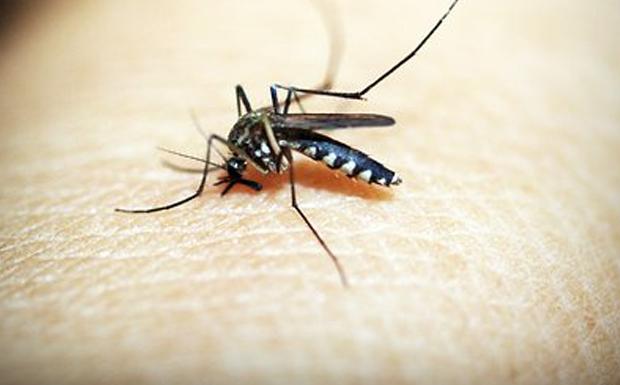 Ιός του Δυτικού Νείλου: Δείτε σε ποιες περιοχές της Ελλάδας κυκλοφορούν μολυσμένα κουνούπια