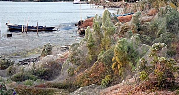 Ιστός αράχνης κάλυψε παραλία στο Αγρίνιο – Απίστευτες εικόνες