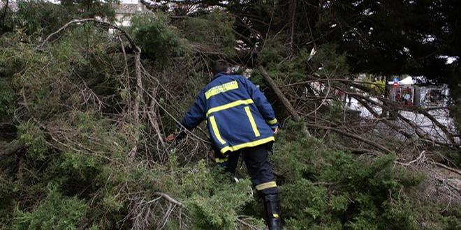 """Ο """"Ξενοφών"""" χτυπά την Αττική: Πτώσεις δέντρων λόγω ανέμων – Έκλεισε η λεωφόρος Αλεξάνδρας"""