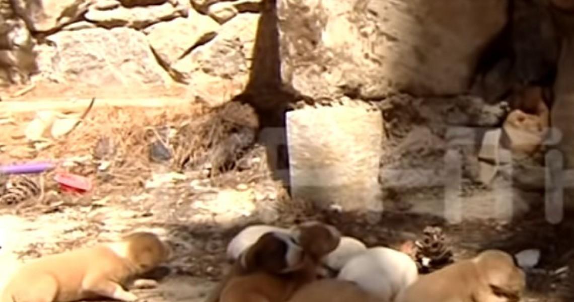 Απίστευτη κτηνωδία: Έκλεισαν κουταβάκια σε ξυλόφουρνο και έβαλαν φωτιά