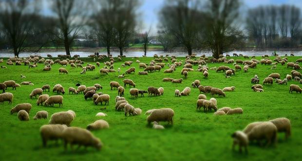 Ν.Δ.: 100 εκατ. ευρώ κοινοτικά κονδύλια για κτηνοτροφία στην Ιρλανδία. Ο κ. Αραχωβίτης ακούει;