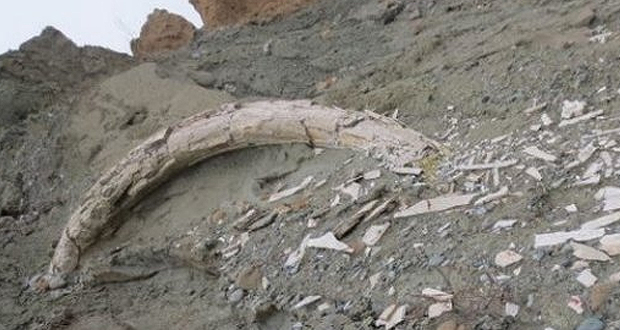 Ορυχείο Αμύνταιου: Εντοπίστηκε προϊστορικός χαυλιόδοντας 2 μέτρων