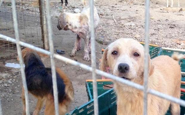 Συνελήφθη ο αντιδήμαρχος Σπάρτης, υπαίτιος για τον χρόνιο βασανισμό εκατοντάδων έγκλειστων ζώων στο Δημοτικό Κυνοκομείο Σπάρτης