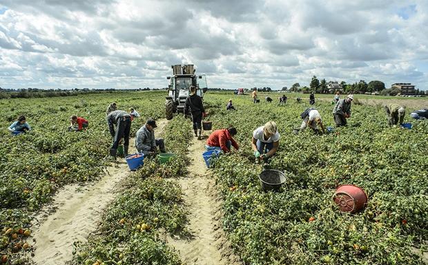Το «ΠΑΡΟΝ» αποκαλύπτει: Πτωχεύουν και τον αγρότη!