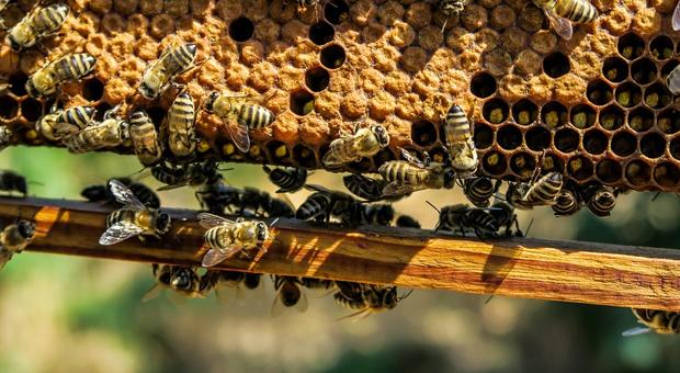 Ελληνικό μέλι: Ποιο είναι αυτό το πολύτιμο δώρο της ελληνικής φύσης στον άνθρωπο