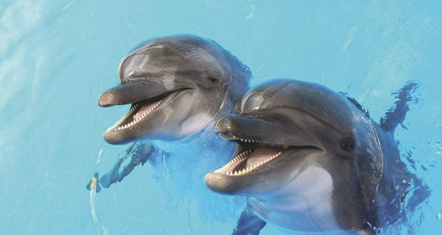 Επιστήμονες ανακάλυψαν ότι από τη νόσο Αλτσχάιμερ προσβάλλονται και τα δελφίνια…