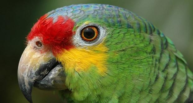 Τον προηγούμενο μήνα έγινε στη Βραζιλία η σύλληψη ενός… παπαγάλου…
