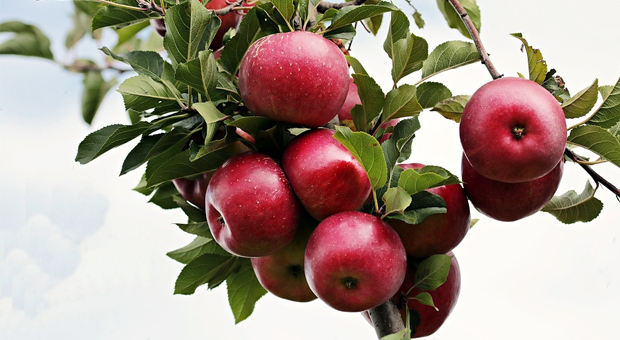 Τελικά πώς μας ωφελεί το «ένα μήλο την ημέρα»;