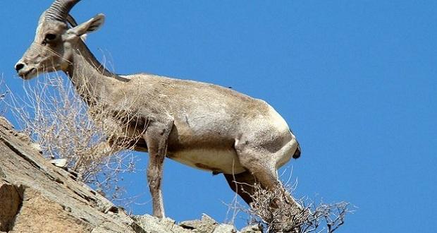 Welt: Κατσίκες που πλήθυναν στη Σαμοθράκη μέσω ευρωπαϊκών επιδοτήσεων μετατρέπουν το νησί σε σεληνιακό τοπίο
