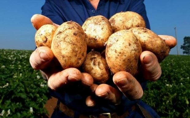 Χαρακόπουλος προς Βορίδη: Ενισχύσεις και στη φθινοπωρινή πατάτα λόγω κορονοϊού