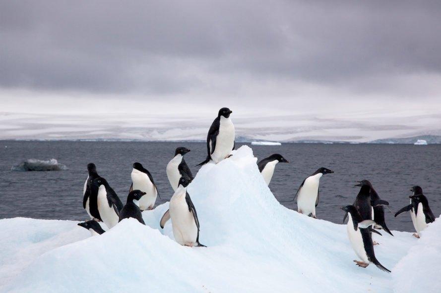 Ανταρκτική: Για πρώτη φορά στα χρονικά η θερμοκρασία ξεπέρασε τους 20 βαθμούς Κελσίου!