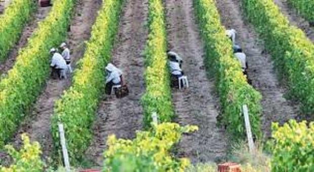 ΥπΑΑΤ, Μ. Βορίδης: Στηρίζουμε εμπράκτως τον αμπελοοινικό κλάδο – 2 εκατομμύρια ευρώ στον πράσινο τρύγο