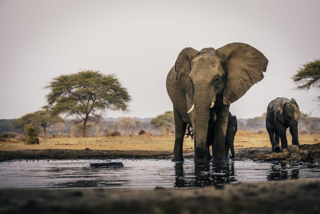 Πεθαίνουν οι ελέφαντες στην Μποτσουάνα