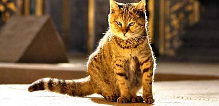 Οι «θρυλικές» γάτες της Αγιάς Σοφιάς