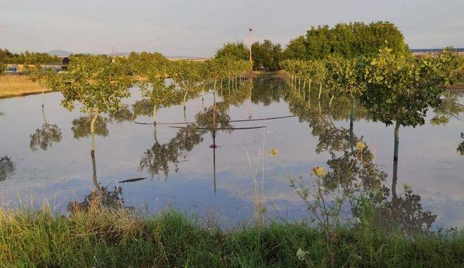 Λάρισα: Χαλάζι κατέστρεψε εκατοντάδες στρέμματα καλλιεργειών