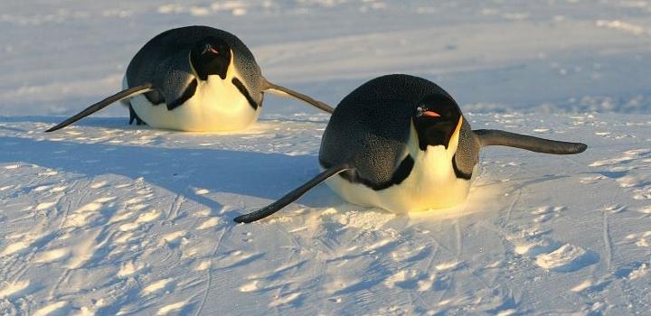 Βρετανοί επιστήμονες ανακάλυψαν νέες αποικίες αυτοκρατορικών πιγκουίνων στην Ανταρκτική