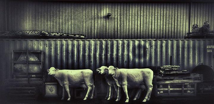 Ομαδική Έκθεση Φωτογραφίας Fine Art στη Blank Wall Gallery