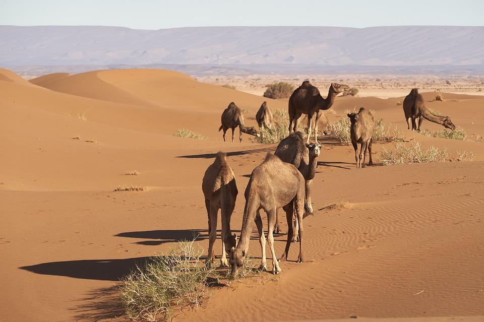 Χιόνισε στην έρημο Σαχάρα και οι εικόνες εκπλήσσουν
