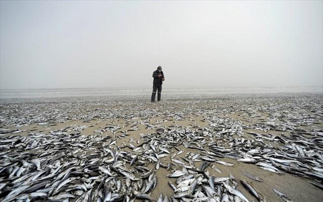 Χιλή: Ξεβράστηκαν χιλιάδες ψάρια σε ακτή