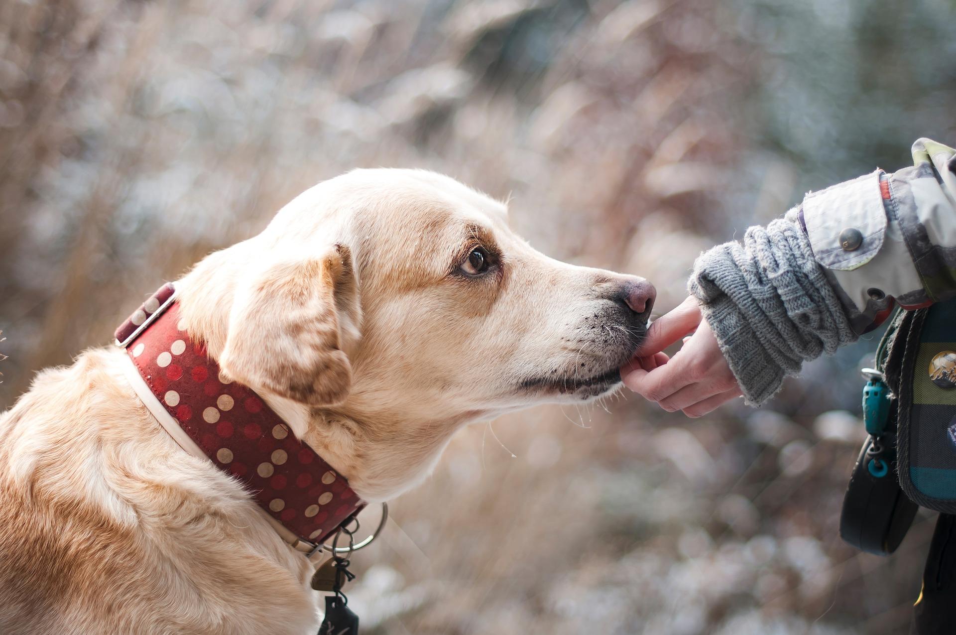 Μάξιμος με Πέτσα: Επιβεβλημένη η αντιμετώπιση των αδέσποτων ζώων – Μετέφερε τις ενστάσεις των κυνηγών για τα ζώα συντροφιάς