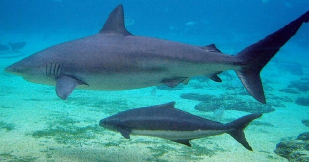 Εκεί που γεννούν οι καρχαρίες