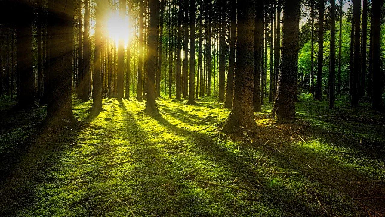 Μπαίνουν από το «παράθυρο» οι ιδιώτες στα δάση!