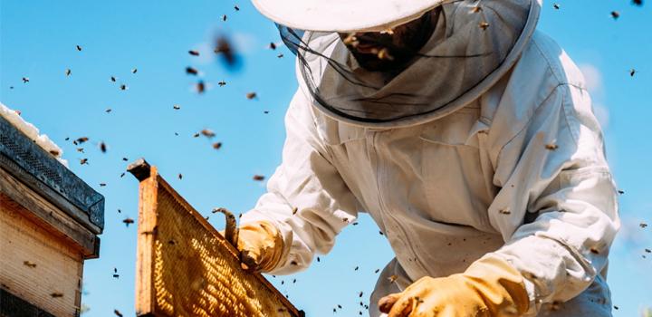 Ο Όμιλος ΗΡΑΚΛΗΣ στηρίζει τη βιώσιμη ανάκαμψη του νευραλγικού κλάδου της μελισσοκομίας στη Βόρεια Εύβοια