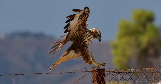 Αργολίδα: Πανευρωπαϊκή Γιορτή των Πουλιών (EuroBirdwatch)